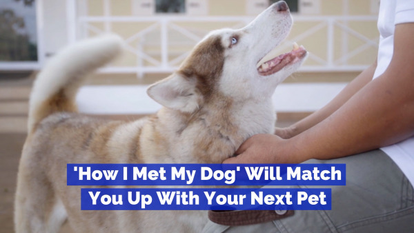 Use This Website To Find The Perfect Dog