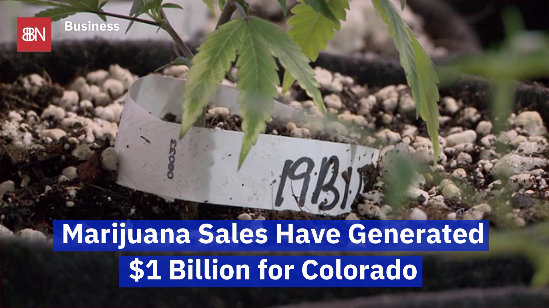 Colorado Rakes In the Marijuana Money